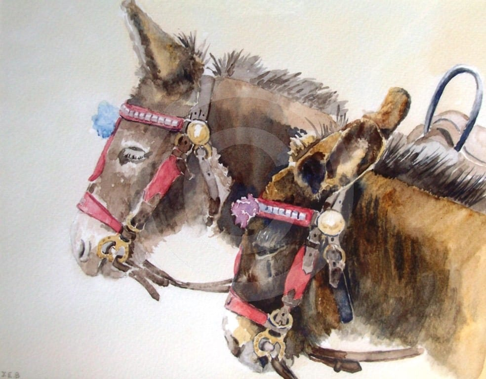 Scarborough's Donkeys by Janet Basten