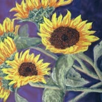 Sunflowers by Duncan Baird
