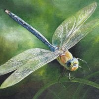 Dragonfly by Teresa Hollins