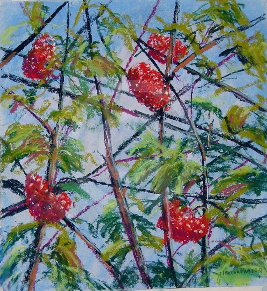 Rowan Berries by Hector Fraser