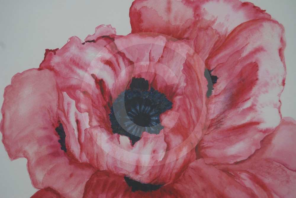 Poppy by Margaret Owen