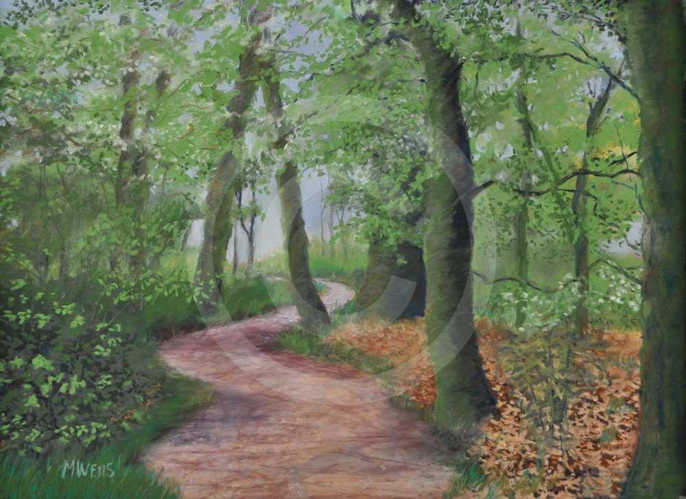 Woodland Walk Burton Agnes by Mary Wells