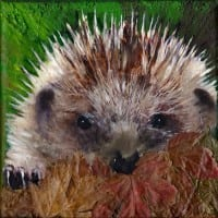 Hedgehog in Autumn Leaves by Teresa Hollins