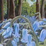 Bluebells – pastel by Duncan Baird