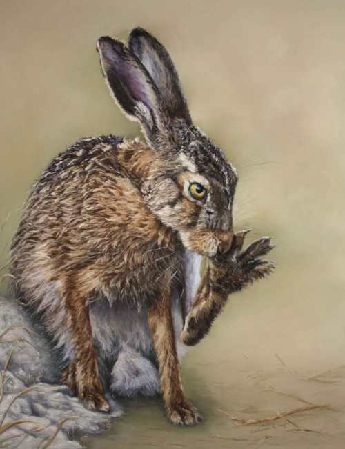Cath Inglis – Grooming Hare