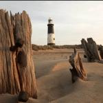 Spurn Point Safari Trip