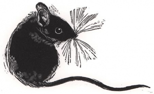 Portrait of a Wood Mouse by Cathryn Kuhfeld (Society of Wood Engravers)